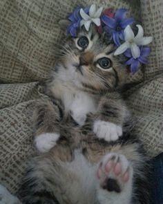 Awwww cute!! #cat #cats #catsagram #catstagram #instagood #kitten #kitty #kittens #pet #pets #animal #animals #petstagram #petsagram #photooftheday #catsofinstagram #ilovemycat #instagramcats #nature #catoftheday #lovecats #furry #sleeping #lovekittens #adorable #catlover #instacat by sugarncko