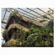 The Barbican Conservatory .... On the 3rd floor of the Barbican Centre . A hidden gem . Open on Sunday's . Worth a look . Magical  Photo credit Laura Elizabeth Instagram Thetaintedcherry