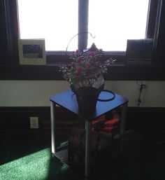 March 21, 2013 - snow up to my knees outside but here inside the first signs of spring - Azaleas at 124 W. Eau Claire St.
