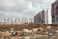 New housing development in the outskirts of Casablanca. The Moroccan government has been ambitiously building new housing blocks for low-income families with the goal of eradicating the city's remaining shanty-towns, largely inhabited by rural people looking for work in the city.