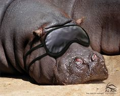 Nap time for Hippo. very cute advertisement, tone is playful and funny