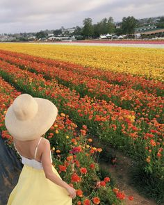 the Carlsbad Flower Fields in Southern California // sun hat + yellow midi skirt uniqlo petite fashion blog