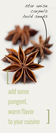 Info: star anise uses, history, and more ~ from Monterey Bay Spice Company's Archives East Indian Food, Spice Company, Spices And Herbs, Star Anise, Indian Curry, Monterey Bay, Key Ingredient, Slow Cooking, Garam Masala