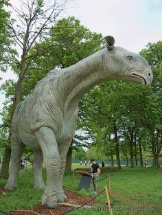 Paraceratherium reconstruction