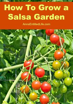 What would be better than fresh salsa made from your own homegrown ingredients? How to grow a salsa garden. #salsa #gardening #dan330 http://livedan330.com/2015/04/09/how-to-grow-a-salsa-garden/