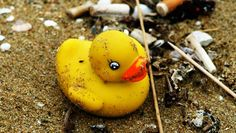 A shipping container filled with rubber duckies was lost at sea in 1992, and the bath toys are still washing ashore today.