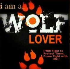 Save the wolves! Wolf Spirit, My Spirit Animal, Beautiful Creatures, Animals Beautiful, Wolf Qoutes, Wolf Stuff, Wolf Love, Wolf Pictures, She Wolf