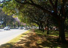 Pelas ruas que andei   #gratidão #sunny #sunnyday #sun #sunshine #nature #nature_perfection #naturelovers #natureza #photooftheday #photographer #photo #photoshoot #photograph #art #artistic #artisticexpression #artisticelement #tree #lifestyle #gratitude #landscape #way #walking #Brasília #Brasil #Brazil by sarahagsilva