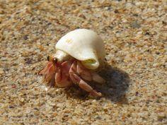 Hermit Crab, Koh Lanta, Thailand