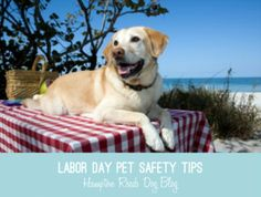 It's officially the end of Summer and we hope everyone is getting some downtime this weekend to enjoy friends, family and food!  Let's keep our pets safe this Labor Day...here are some tips to keep in mind this weekend.Have a great weekend everyone!   Labor Day Pet Safety Tips