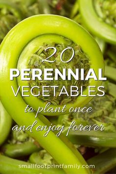 20 Perennial Vegetables to Plant Once for Years of Bounty! With the exception of asparagus, rhubarb and artichokes, most gardeners are unaware of the tasty, nutritious bounty that perennial vegetables can offer. Try these 20 perennial veggies for a bounty