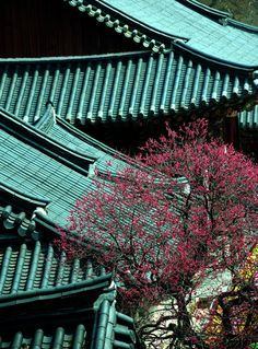 lovesouthkorea: Plum blossoms, Hwaeomsa temple (source)