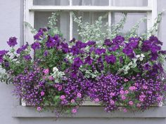 .Blues+ purples with silver for a beautiful combo in window boxes