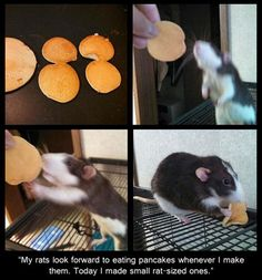 This is the sweetest thing! My rats always love eating my food. :3