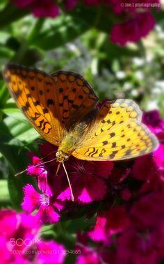 The art of nature (Joe.L  Photography / Barcelona / España (Spain)) SONY RX100 MARK III #macro #photo #insect #nature