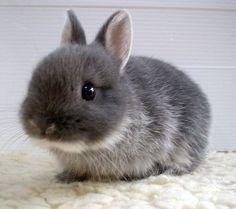 Cuteness in Fur