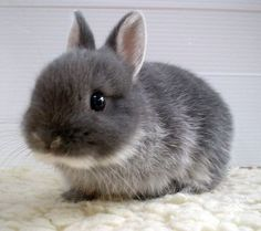 Cuteness in Fur.