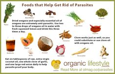 What Type of Parasites do You Have?   Organic Lifestyle Magazine