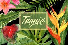 Watercolor Tropic Clip Art @creativework247