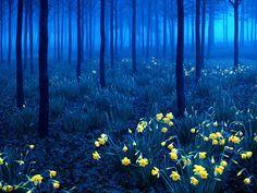 Tajemnicze lasy, w których z przyjemnością byś się zagubił - Joe Monster