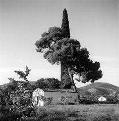 Church with pine tree and cyprus (Γαλατά) - Μουσείο Μπενάκη Cyprus, Photography, Photograph, Fotografie, Photoshoot, Fotografia