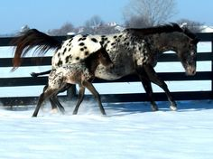 Dashing Through the Snow - Squee daily at these cute animals and the absolute cutest animal pics and gifs ever known to man. Horses And Dogs, Cute Horses, Horse Love, Beautiful Horses, Animals Beautiful, Pretty Horses, Baby Horses, Simply Beautiful, Horse Pictures