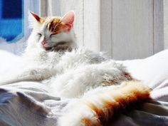 Wally (39) Cats, Animals, Gatos, Animales, Kitty Cats, Animaux, Cat, Animal, Animais