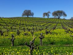 California Wine Guide, Reviews and Ratings | California Winery Advisor - Sonoma Wine Country Photographs