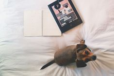 Luna is brushing up on her web layout skills this morning, how are you starting your day today? ✨
