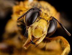 Confira as incríveis selfies das abelhas nesta lista.