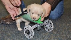 Meet Tumbles, the pup born with 2 legs. He took his first steps with a custom wheelchair made using a 3-D printer!