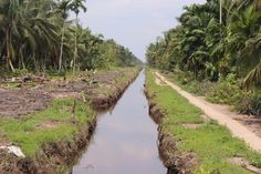 Desa sungai raya, kiri kanan hanya terlihat kelapa