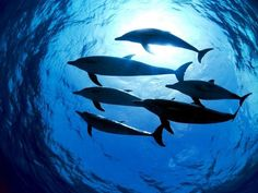 Great photo of dolpins swimming in a group at night! Beautiful!