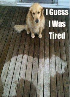Let Sleeping Dogs Lie - The Sleeping Blog