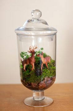 DIY : Terrarium Centerpiece for a Woods Themed Wedding {Change it to beachy look for Nautical Theme}