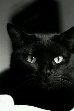 Black-whitte