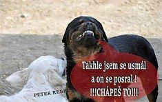 Animals And Pets, Jokes, Teen, Puppies, Doggies, Funny, Life, Pets, Little Puppies