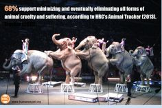 68% support minimizing and eventually eliminating all forms of animal cruelty and suffering.