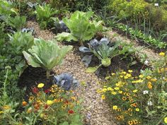 Wenn auch Sie einen Kräutergarten anlegen möchten, um nicht immer nur Kräuter aus dem Supermarkt zu verwenden, werden Ihnen die folgenden Tipps dabei helfen.