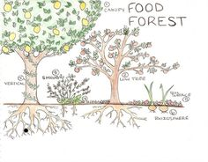 create your own food forest! it's easy!!!