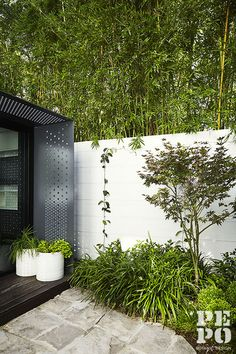 Pepo Botanic Design are landscape architects based in Sydney dedicated to bringing outdoor spaces to life. Call to discuss your dream garden today. Landscape Architecture, Landscape Design, Architects Sydney, Bamboo Screening, Outdoor Spaces, Outdoor Decor, Contemporary Garden, Open Up, Beautiful Space