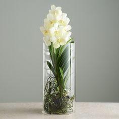 Center Piece Whole Mokara Or Vanda Orchid In Vase Orchids