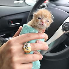 A palm-sized orphaned kitten found herself in a tissue box at a pet supply store, squeaking for her mother. A rescuer rushed to save the tiny ball of fur and brought her back from the brink.Meet Hanky! Hannah Shaw @kittenxladyA week ago, a local Petco received a tiny kitten in a tis...