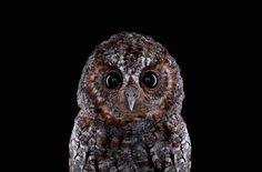 http://www.fubiz.net/2014/09/11/wild-animals-portraits/