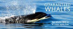 Guaranteed Whales v06