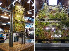 """verdego: """" The Airplant display is finally completed the Quiksilver Venice Store. We are delighted to have the wonderfully talented Landscape Architect Josh Rosen on our team to help design the Plant Wall, Plant Decor, Home Garden Plants, Home And Garden, Air Plants Care, Plant Projects, Air Plant Display, Plant Design, Greenery"""