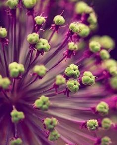 Olive Green & Aubergine Essence ✦ ✦ from my board: https://www.pinterest.com/sclarkjordan/olive-green-aubergine-essence/
