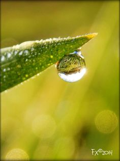 morning sun in drop of water at the tip of grass