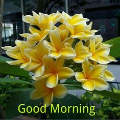 Good morning with flowers Good Friday Images, Good Morning Sunday Images, Good Morning Thursday, Good Morning Msg, Good Morning Roses, Good Morning Beautiful Images, Good Morning Cards, Morning Morning, Good Morning Picture