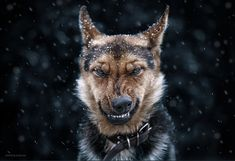 10+ Stunning Animal Portraits By Ukrainian Photographer Sergey Polyushko